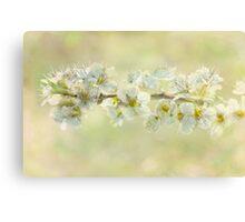basking blossoms Canvas Print