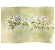 basking blossoms Poster