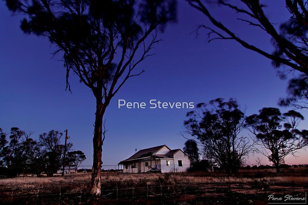 A House in the Bush by Pene Stevens