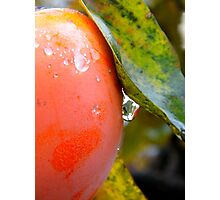 A Drop Just Before Falling Photographic Print