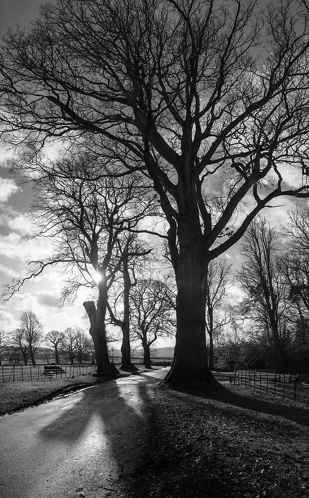 Tree Study No. l by John Burtoft