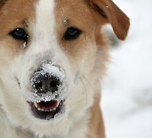 A Romp in the Snow by Brian Gaynor