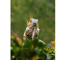 mohican in the rain Photographic Print