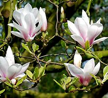 First signs of spring  by Arie Koene
