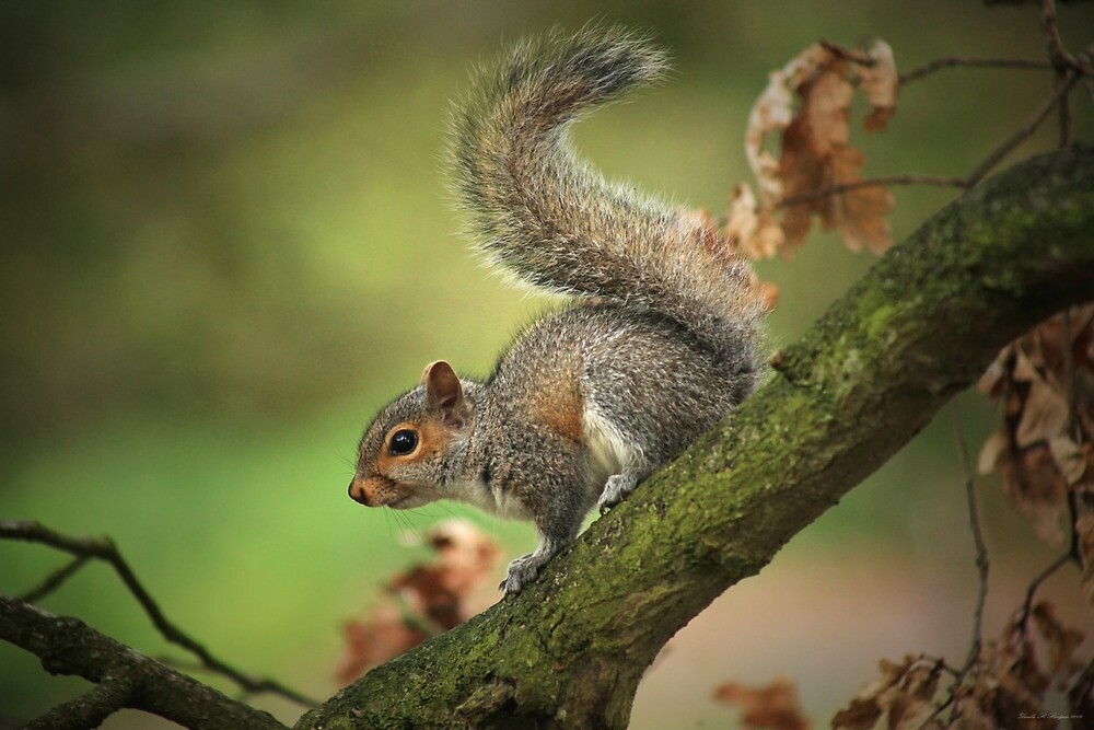 Tails Up! by Ursula Rodgers