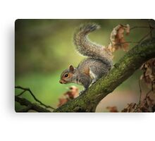 Tails Up! Canvas Print