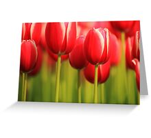 Beauty in Red Greeting Card