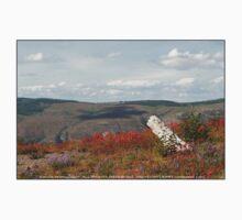 dead tree & paintbrush wildflowers on Johnston's Ridge Kids Tee