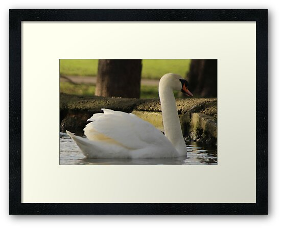 Swan song by Theresa Selley