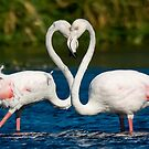 Heart to heart by Anton Alberts