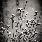 Wintry Bouquet by Radharc21