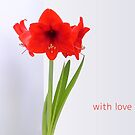 Red Amaryllis with Love by VMDolphin