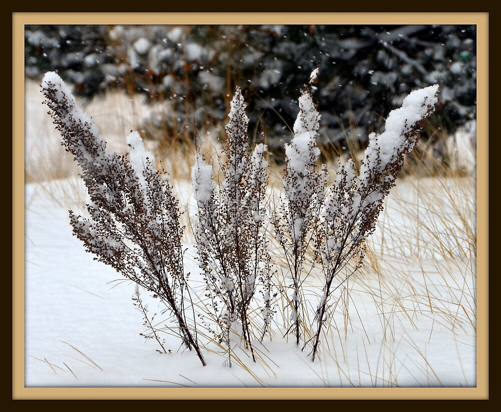 Winter Weeds by BarbL