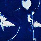 This is My Heart Cyanotype iPod Case by gloriart