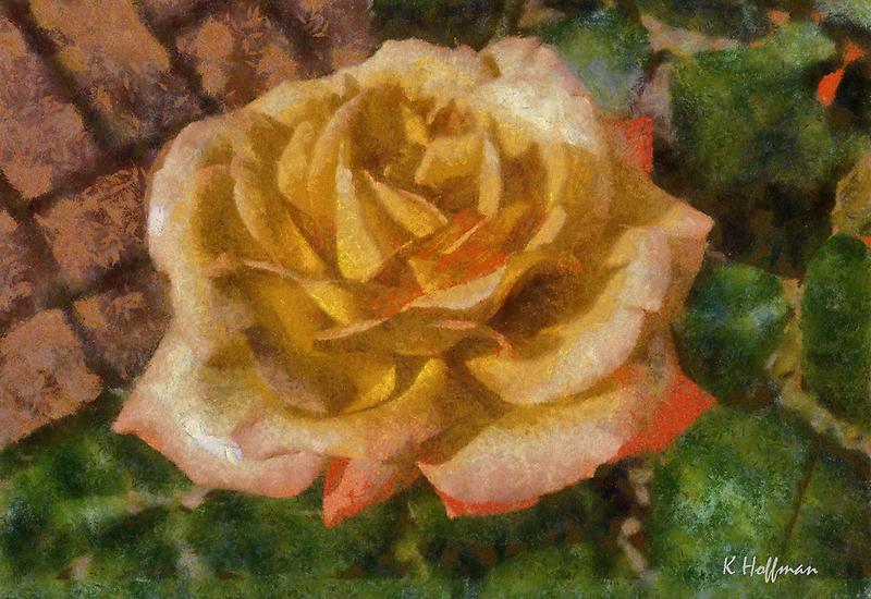 Peach Rose by Kenneth Hoffman