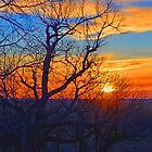 Sunset Orange-Blue by RenieRutten