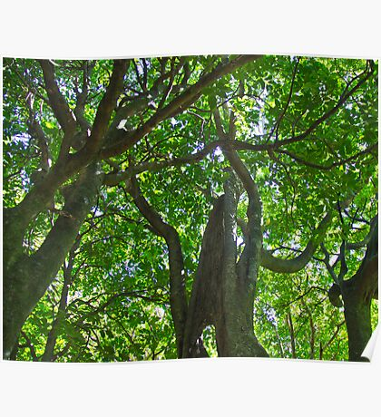 Native trees in light, NZ Poster