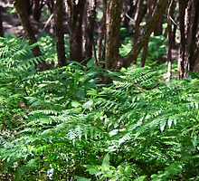 NZ fern and manuka trees  by trevallyphotos