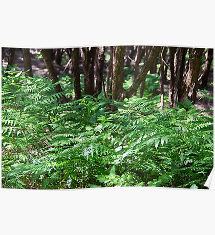 NZ fern and manuka trees  Poster