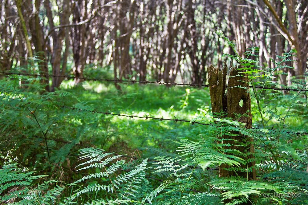Fence post, fern and manuka by trevallyphotos