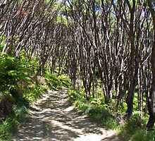 manuka trees and fern with winding road by trevallyphotos