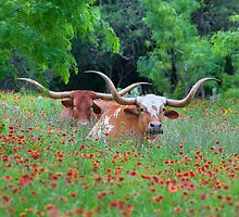 Texas Longhorns in a Field of Wildflowers by RobGreebonPhoto