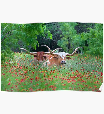 Texas Longhorns in a Field of Wildflowers Poster