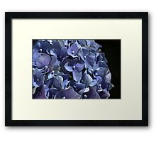 Seeing Blue Framed Print