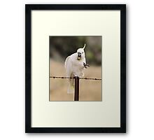 Game of Mineshaft , Sulphure Crested Cockatoo with Thistle Framed Print