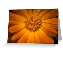 Calendula Officinalis Greeting Card