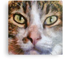 Cool for Cats Metal Print