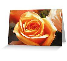 peach rose Greeting Card