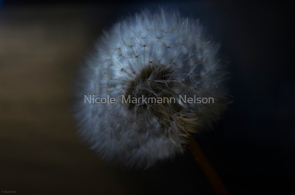 A touch of light by Nicole  Markmann Nelson
