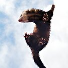 Flying Ferret by Mark Cooper