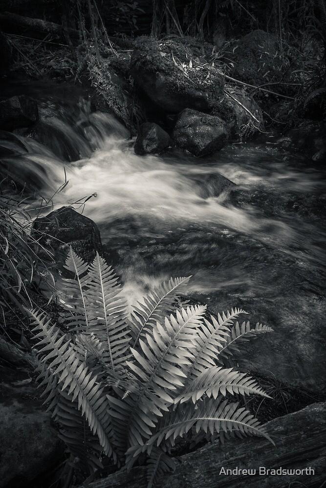 stream by Andrew Bradsworth