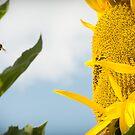 Sun Seeker by Donell Trostrud