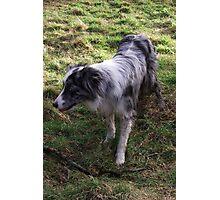 Go on, throw my stick. Photographic Print
