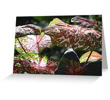 Tropical Plants And Colors - Plantas Y Colores Tropicales Greeting Card