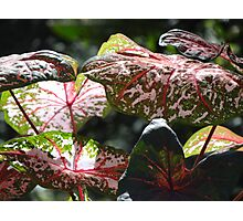 Tropical Plants And Colors - Plantas Y Colores Tropicales Photographic Print
