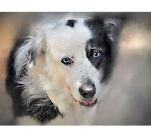 Dog Photographic Print