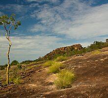 Kakadu by Cam Ritchie