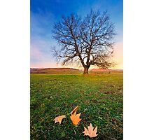 last leafs Photographic Print