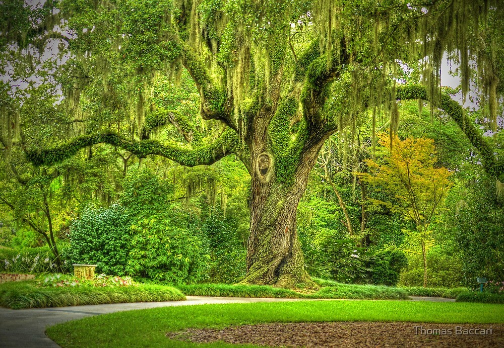 THE OAK GARDEN IN HDR by TJ Baccari Photography