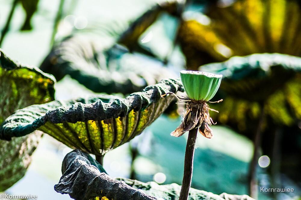 Happiness is...appreciate lotus leafs...Got Featured Work by Kornrawiee