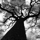 Mighty Oak by LittleMoose