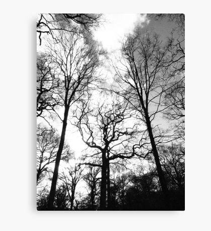 Stretching Trees Canvas Print