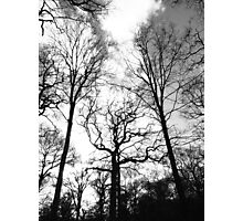 Stretching Trees Photographic Print