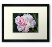 Weeping Rose Framed Print