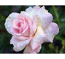 Weeping Rose Photographic Print
