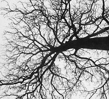 Misty Tree by Ellaaa M